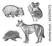 koala bear  wombat  echidna ... | Shutterstock .eps vector #641054272