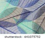 mulberry leaves skeletons in... | Shutterstock . vector #641075752