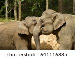 elephant of thailand | Shutterstock . vector #641116885