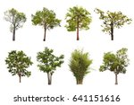 set of six green summer trees... | Shutterstock . vector #641151616
