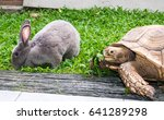 Stock photo african spurred tortoise centrochelys sulcata and rabbit 641289298