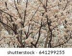 cherry blossoms flowers  korea | Shutterstock . vector #641299255