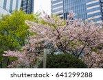 cherry blossoms flowers  korea | Shutterstock . vector #641299288