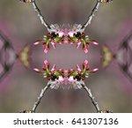 cherry blossoms   Shutterstock . vector #641307136