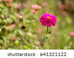 beautiful pink flowers with... | Shutterstock . vector #641321122