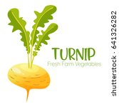 vector turnip isolated on white ... | Shutterstock .eps vector #641326282