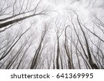 naked tree branches in winter... | Shutterstock . vector #641369995