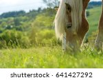 Stock photo beautiful red horse grazing in a meadow in spring 641427292
