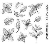 Mint Hand Sketch Vector...