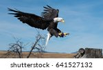 A Bald Eagle Is Preparing To...