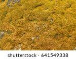 Yellow Moss Background