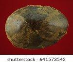 thai amulet  buddha images | Shutterstock . vector #641573542