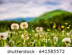 dandelion field in rural valley. countryside landscape in mountains at sunrise. gorgeous springtime weather - stock photo