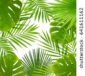 tropical leaves on white... | Shutterstock . vector #641611162