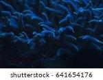 birdnest coral in coral... | Shutterstock . vector #641654176