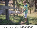 young goat in a farm. little... | Shutterstock . vector #641660845