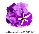 petunias on a white background | Shutterstock . vector #641686492