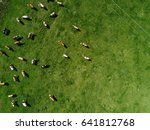 Aerial View Of Cows Herd...