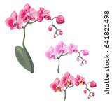 Set Phalaenopsis Orchid  Pink ...