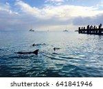 Dolphins At Sunrise  Monkey Mi...