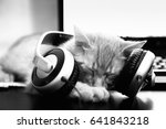 Stock photo dj cat resting with music in headphones near the computer keyboard 641843218