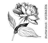 wildflower peony flower. hand... | Shutterstock .eps vector #641866306