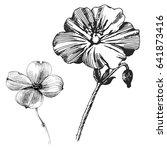 geranium rozanne flower. wild... | Shutterstock .eps vector #641873416