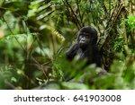 Uganda. Close Up Portrait Of A...