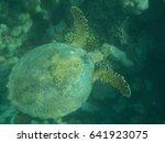 underwater scene with tropical ... | Shutterstock . vector #641923075