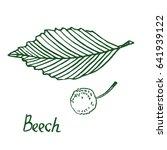 Beech  Beechwood Or Fagus  Lea...