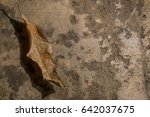 dry leaves on old wood... | Shutterstock . vector #642037675