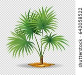 palm tree on transparent... | Shutterstock .eps vector #642058522