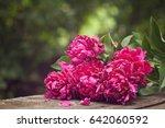 pink peonies  | Shutterstock . vector #642060592