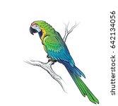 green macaw parrot ara...   Shutterstock . vector #642134056