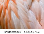 close up of greater flamingo... | Shutterstock . vector #642153712