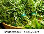 close up portrait of fresh... | Shutterstock . vector #642170575