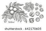 walnuts set. ink sketch of nuts.... | Shutterstock .eps vector #642170605