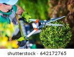 Gardener Trimming Plants. Topiary Work. Passion For Plants Concept Photo. - stock photo