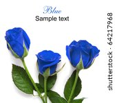 Beautiful Blue Roses Isolated...