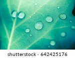 amazing natural green... | Shutterstock . vector #642425176