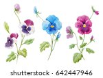 watercolor set of pansy flowers ... | Shutterstock . vector #642447946