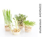 growing microgreens on white... | Shutterstock . vector #642456322