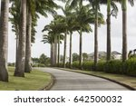 Small photo of Apes Hill, Barbados - April 4th, 2017: Polo Match at Apes Hill Polo Club. A grand entrance to the Apes Hill Polo Club shown off with a majestic avenue of established palm trees.