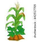illustration of corn  pumpkin... | Shutterstock .eps vector #642517705
