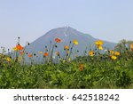 yellow and red poppies against... | Shutterstock . vector #642518242