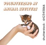 concept of volunteering at... | Shutterstock . vector #642545866