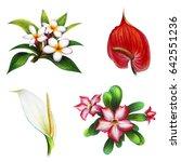 Flowers Of Exotic Garden ...