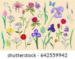 flowers with butterfly... | Shutterstock .eps vector #642559942