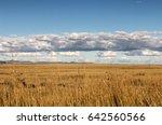 Golden Winter Grassland...