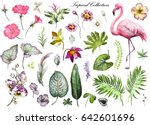 tropical collection with plants ... | Shutterstock . vector #642601696
